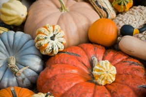 stockvault-squash-and-pumpkins137983